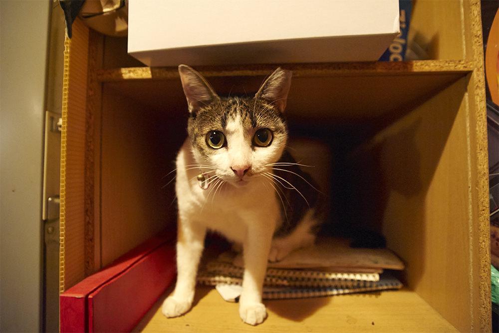 某テレビ番組でも取り上げられたこともあるという看板猫の小鉄(4歳)。