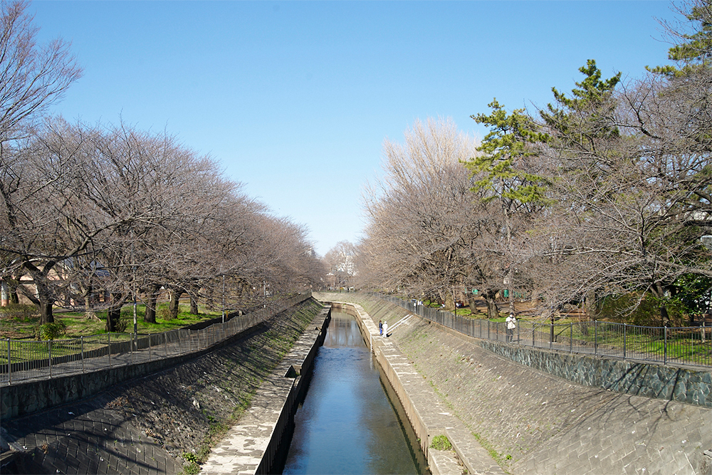 善福寺川緑地でも圧倒的な見どころスポット、尾崎橋のビフォー。