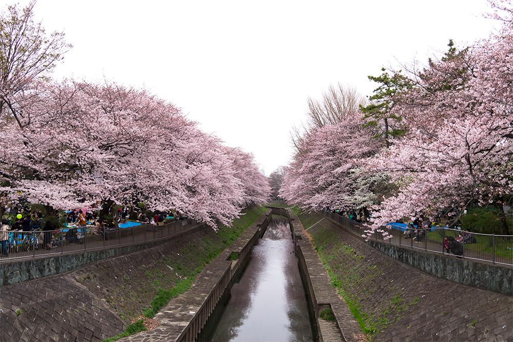 尾崎橋のアフター。ピンクのアーチがまぶしいです。
