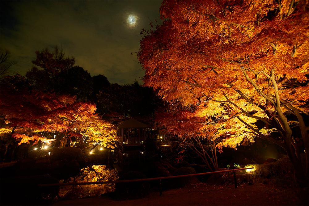 紅葉のライトアップイベント時の様子。息をのむ幻想的な美しさです。