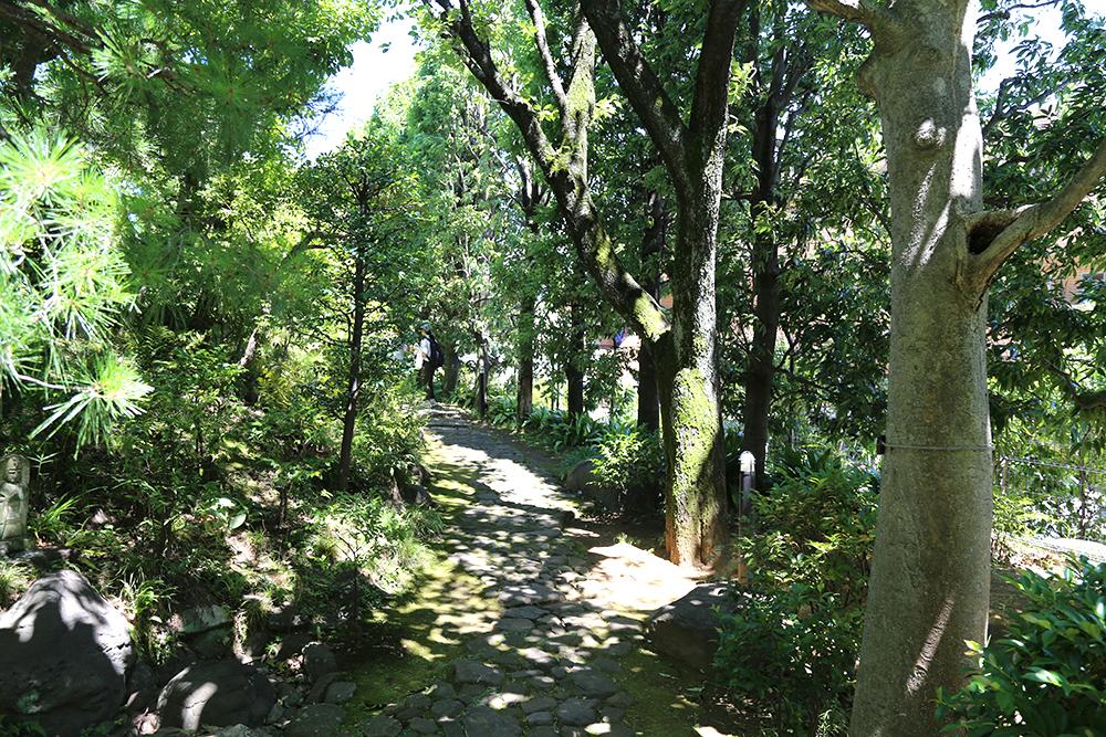 木漏れ日がきれいな石畳の小径。手入れの行き届いた庭の様子が伺えます。