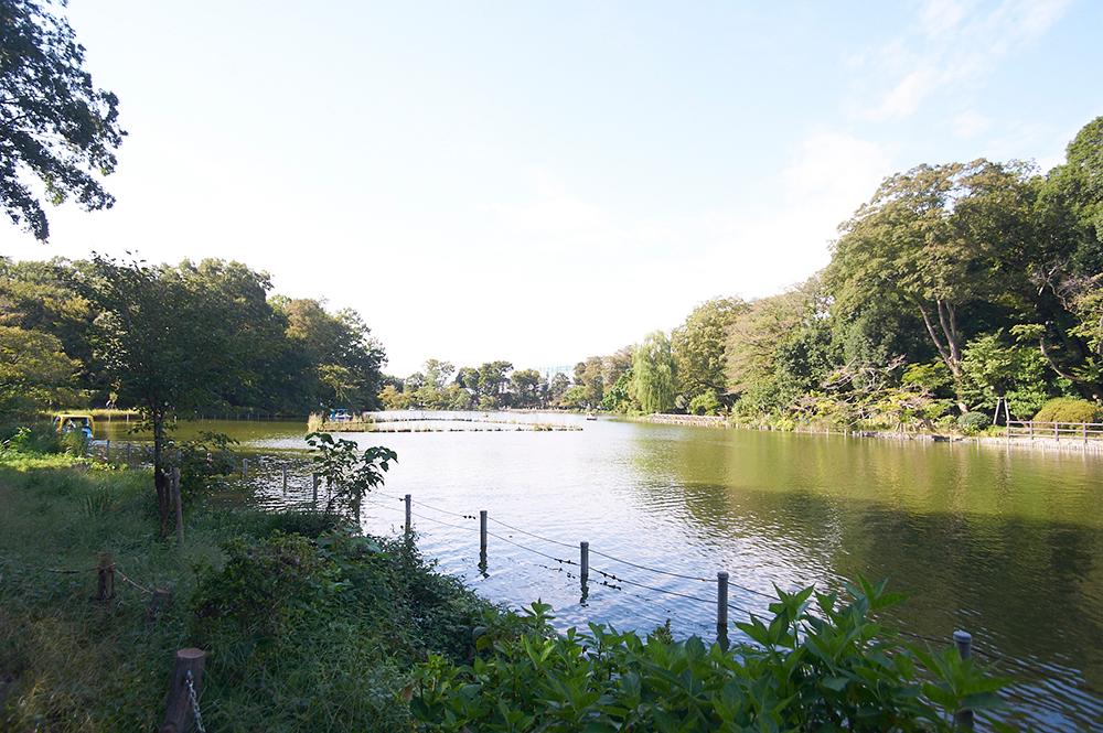 池は、上池と下池のふたつにわかれています。こちらは大きいほうの上池。