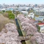 善福寺川緑地・和田堀公園〜川と桜のある風景〜